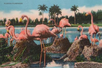 FL-110 Flamingos