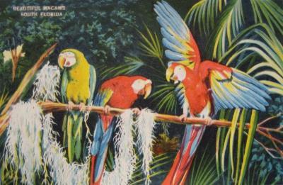 FL-121 Macaws