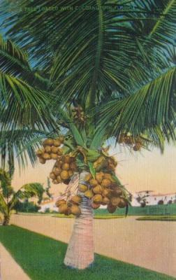 FL-124 Coconut tree
