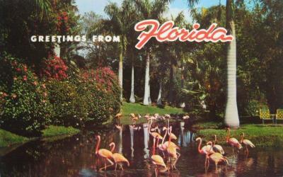 FL-126 Flamingos