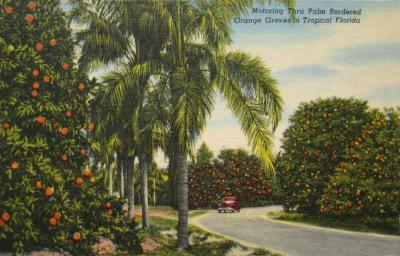 FL-128 Orange Groves
