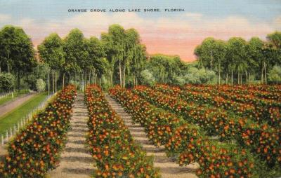 FL-148 Orange Groves