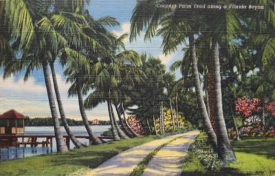 FL-153 Coconut Palm Trail