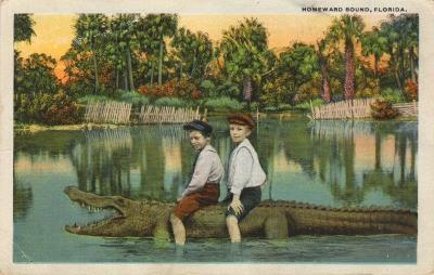 FL-209 Kids riding alligator