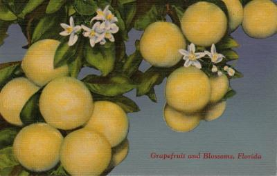 FL-217 Grapefruit
