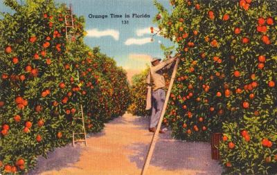 FL-221 Oranges