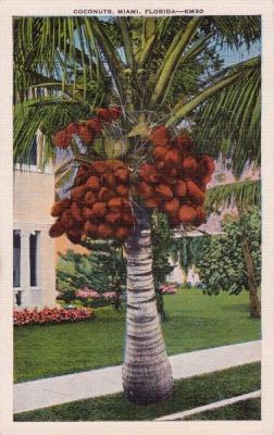 FL-229 Coconuts in Miami