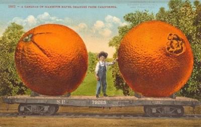 CA-108 Naval oranges