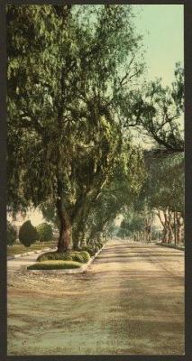 CA-113 Marengo Avenue