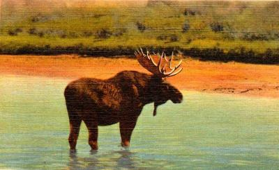 YE-120 Bull Moose