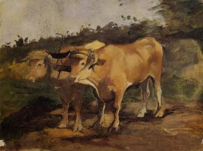 Two Bulls Wearing a Yoke