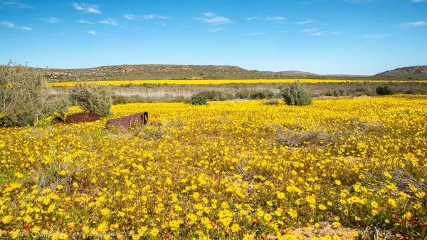 Flowers, Namaqualand