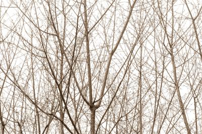 Nature (exclusividade GALERIA ARTSHOT)