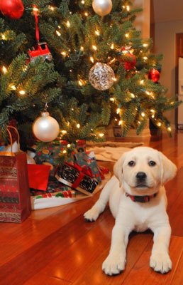 Christmas Tree - Puppy Safety