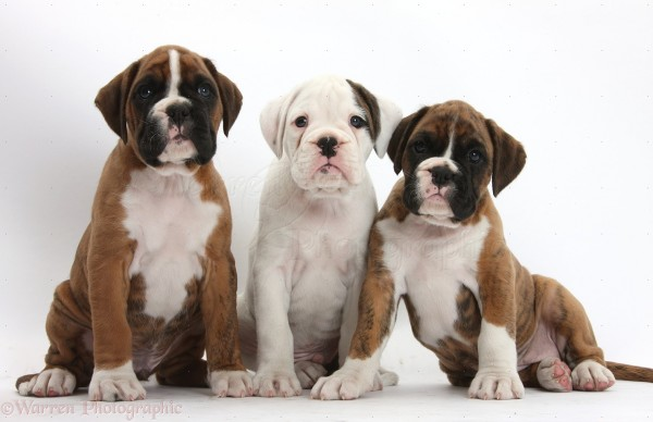 8 Best Large Dog Breeds For Families With Children
