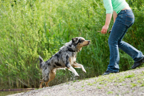 15 Essential Commands to teach Your Dog