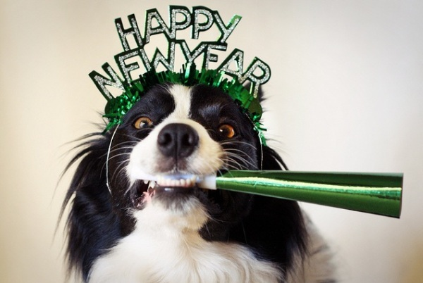 5 Ways to Celebrate the New Year with Your Dog