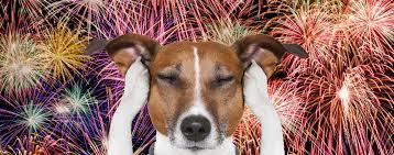 8 Tips for Helping Your Anxious Pet When There Are Fireworks Outside