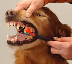 Oral Hygiene and Your Dog's Health