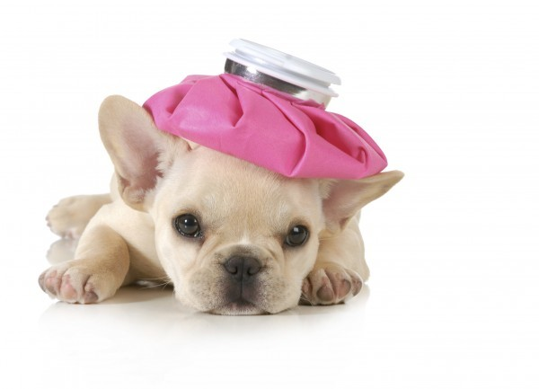 10 Simple Ways To Protect Your Dog Against The Canine Flu Epidemic