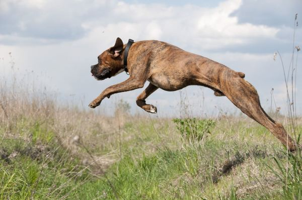 How to Treat Arthritis in Dogs: Glucosamine, Chondroitin Sulfate