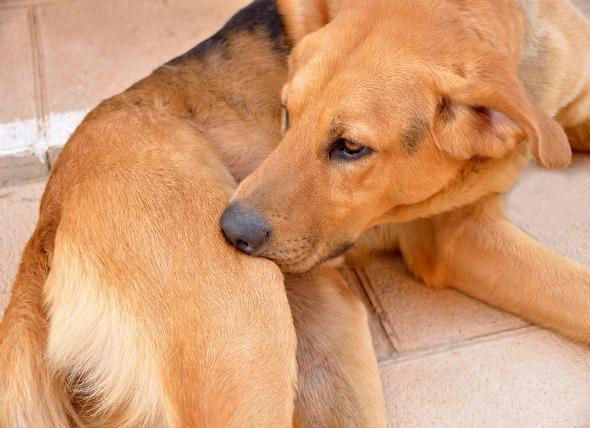 Food Allergies vs. Seasonal Allergies in Dogs