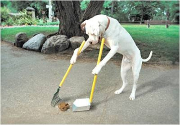 Why Do Dogs and Puppies Eat Poop?