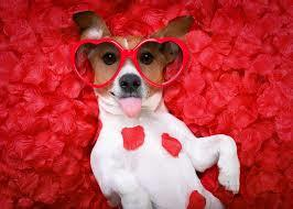 Make Valentine's Day Special for Your Dog