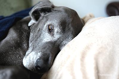 10 Benefits of Adopting an Older Pet