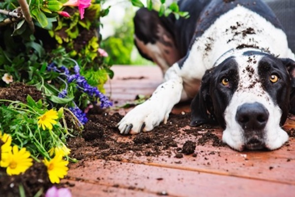 9 Spring-Time Pet Hazards