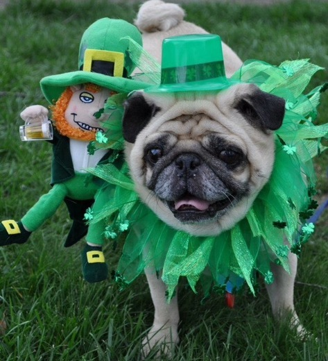 5 Ways to Celebrate St. Patrick's Day with Your Pet