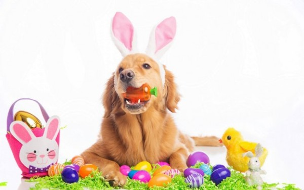 Keeping your pets safe and healthy during the Easter Holiday