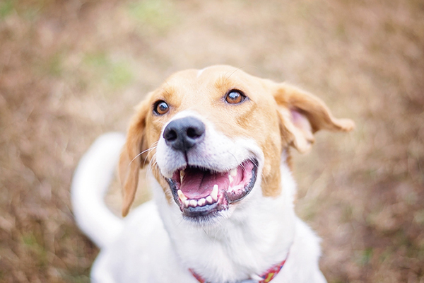 8 Ways To Clean Your Dog's Teeth Without Making Them Hate You!