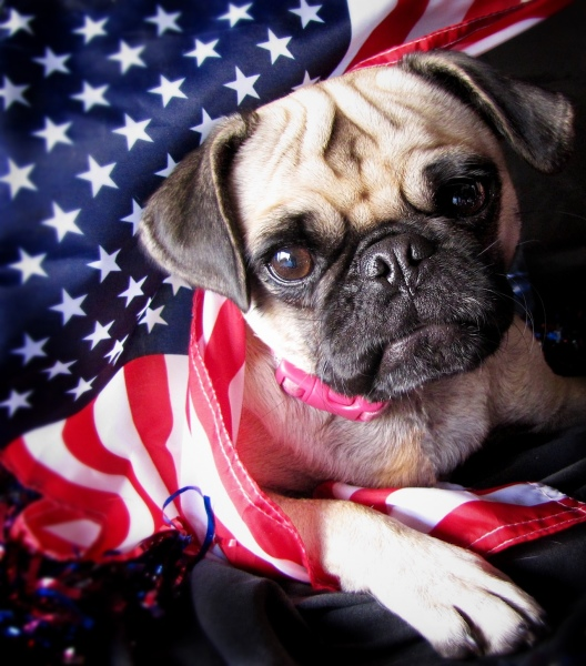 How to Celebrate Memorial Day Weekend Safely With Your Pets