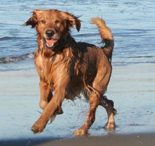 Dog Beach Outings: Tips & Do's and Don'ts