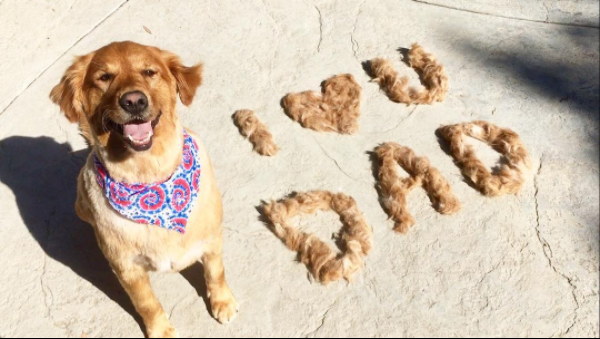 Father's Day Activities to do with Your Dog
