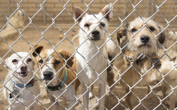 Top Reasons to Adopt a Pet - It's not just the right thing to do; adoption is a reward.