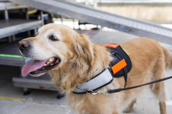 Why You Should Never Pet a Service Dog