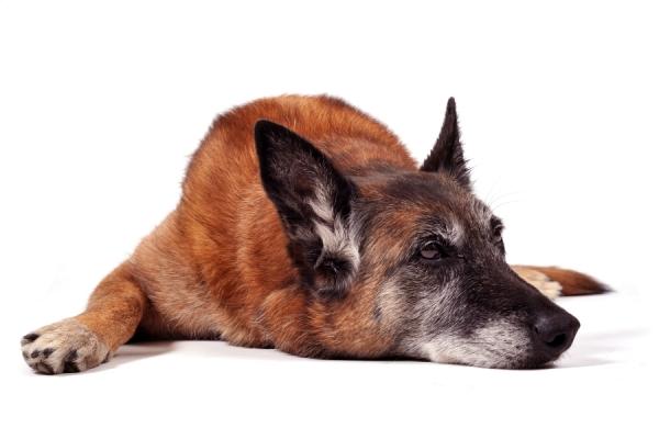4 Behavioral Changes in Senior Dogs