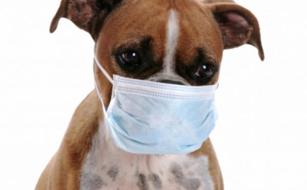 Facts About Parvovirus