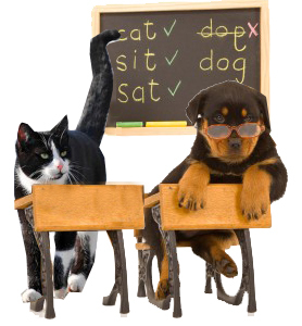 Back to School: How it Affects the Family Pet