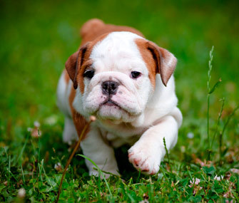 10 Things to Consider Before Bringing a New Pet Home