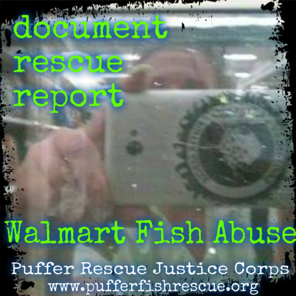 Report Walmart Fish Abuse