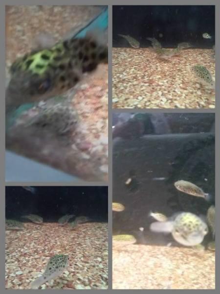 walmart fish abuse