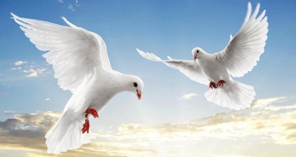 İslam Savaşı Değil Barışı Vaaz Eden Bir Dindir!