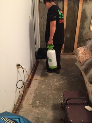 Mold Remediation NYC