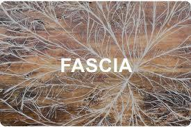 What The Fuzz is Fascia??