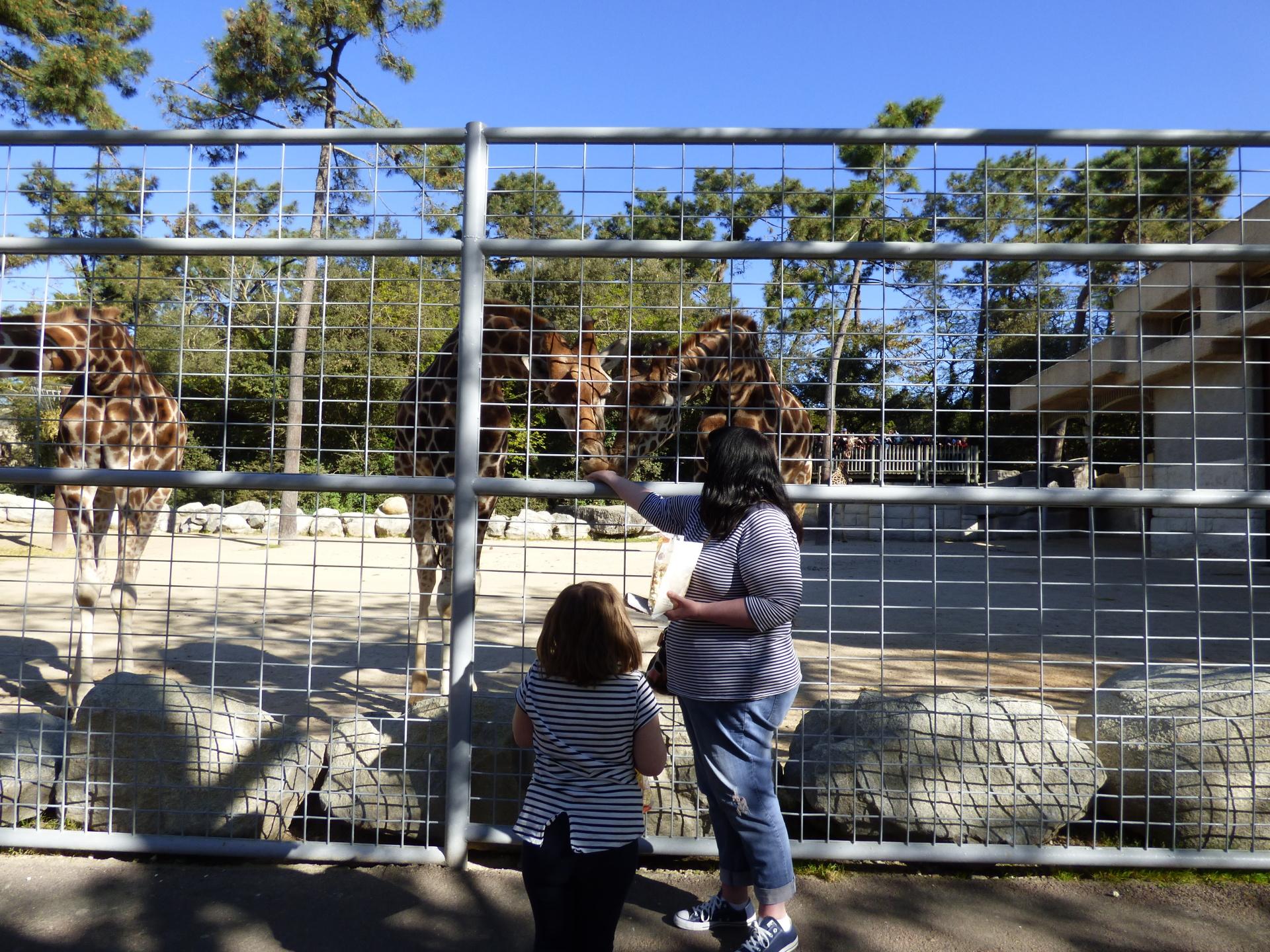 A day out at La Palmyre Zoo, Royan
