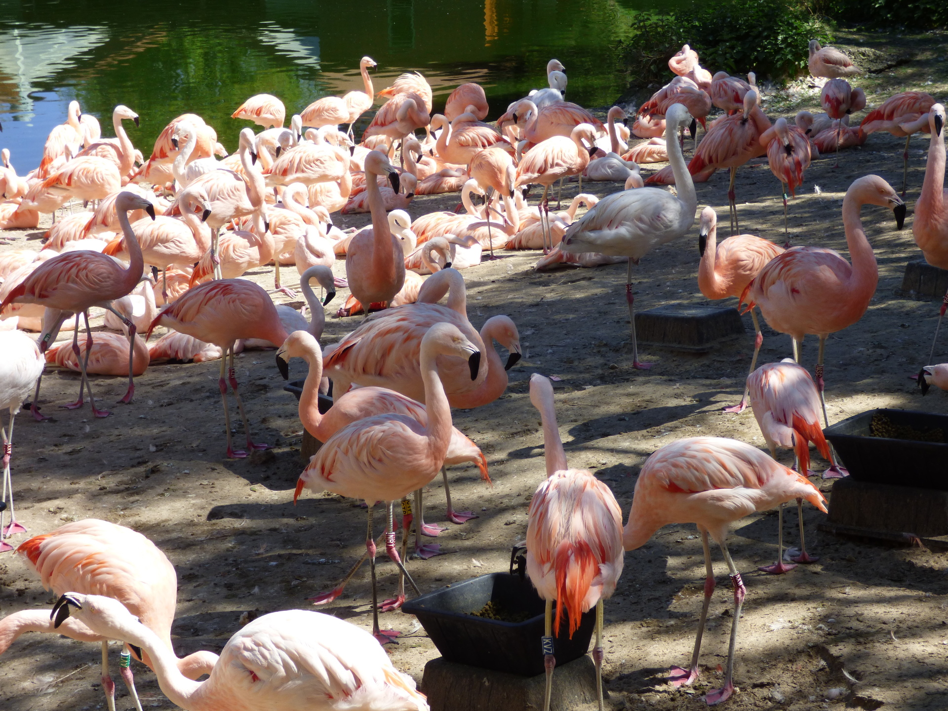 A day out at La Palmyre Zoo, Royan