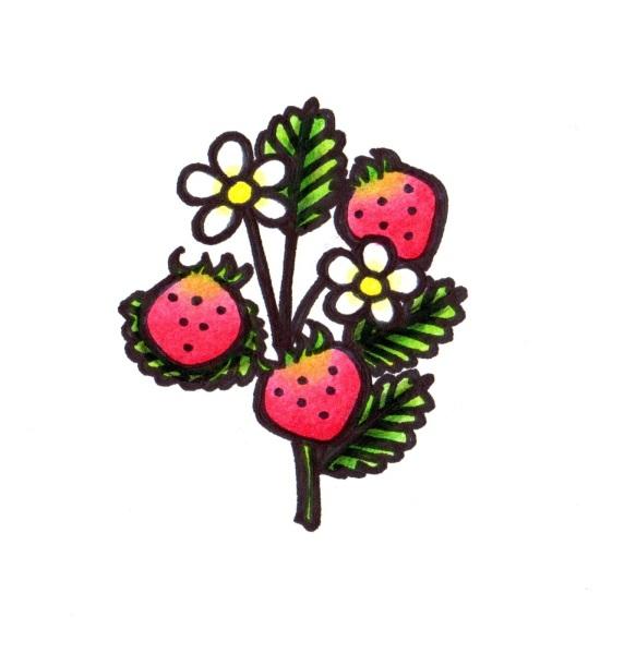 plantpeople wildstrawberries wildstrawberry medicine